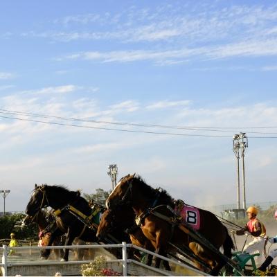 ばんえい競馬/馬文化